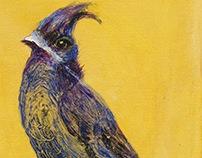 Avian Fables