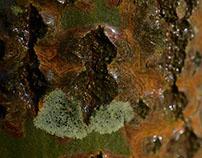 tree skin #2 glossy