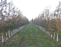 apple harvest 2014 ,la pomme