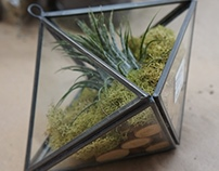Tillandsia Photo Shoot