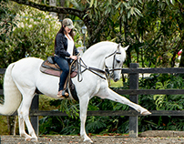 Riding Spain Horse