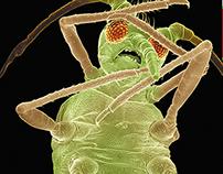 BAYER Bugs