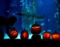 London Aquarium Halloween pumpkins