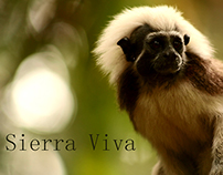 Music And Sound Design for Sierra Viva Documentary