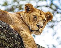 Fotografía de Naturaleza: Kenia y Tanzania