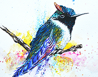 Watercolour bird.