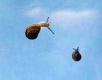 FLYING SNAILS