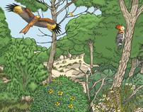 Doñana: Ilustraciones para material didáctico