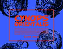 东方蝾螈CYNOPS ORIENTALIS
