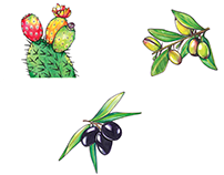PLANTS FROM MOROCCO / Packaging illustration