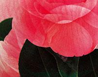 Flora | Diseños para cases