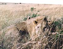 צילום | קניה