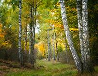 Herbst in der Schorfheide