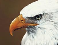 :: Eagle ::