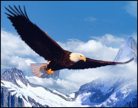 "Game ""find eagle"""