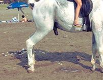 A Horse at the Beach
