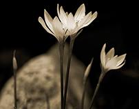 Late Bloomers Insitu