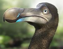 Dodo Reconstruction