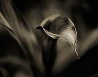 Dark Lilies