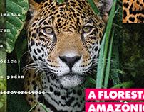 Social Media - A Floresta Amazônica pede socorro.