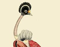 Infertile Birds: Genus GrusBalearica (collage) 2018