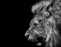 The King Of Beasts Is A Beautiful Lion Logo
