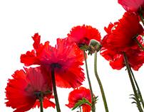 Flora Spring II