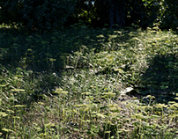 (CGI) - Green Forest