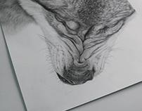 Wolf Head Study