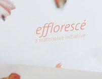 Efflorescé
