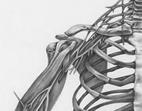 Brachial Plexus and Carbon Dusting