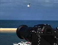 nikon and seagulls