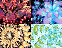 Flowering - VJ Loop Pack (9in1)