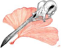 Skulls and Flora