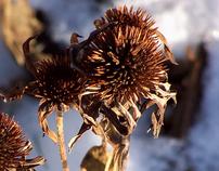 WINTER GRASS - Photography Series