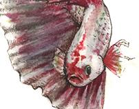 Fish studies