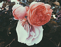 Flowers Pt. II