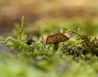 Setas, mushroom