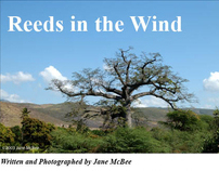 """Reeds in the Wind"" magazine spread"