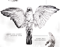 A study of Columbidae