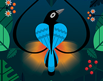 Blue Bird of Paradise Illustration