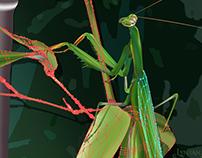 gradient mesh I  |  2013 - 2016