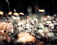Fotografía -Retrato  flores silvestres