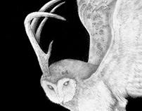 owl's antlers