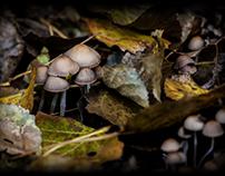 Flowers & Fungi