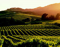 History of Napa Valley Wine Production