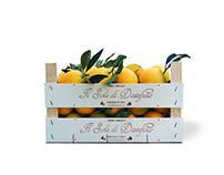 Oranges Packaging - Il Sole di Distefano