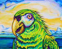 Satellite Beach Parrot