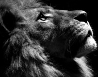 ANIMAL REPRESENTATION {LION}