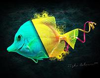 FISH COLOURS | Digital Art